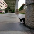 Portrait Of Stray Cat Behind Pillar