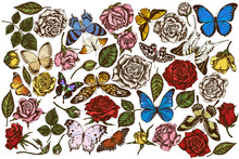 Vector Set Of Hand Drawn Colored Menelaus Blue Morpho, Giant Swordtail, Blue Morpho, Lemon Butterfly, Red Lacewing, African Giant Swallowtail, Alcides Agathyrsus, Wallace's Golden Birdwing, Purple