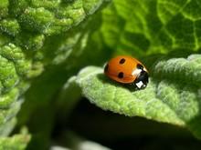 Close-up Side View Of Ladybug On Leaf