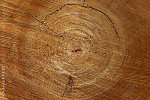 large tree slice texture photo #338885950