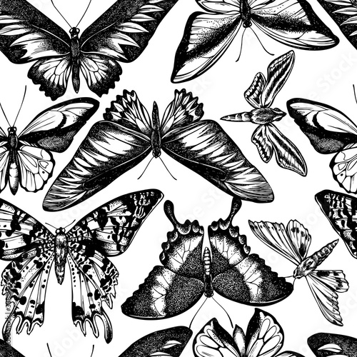 Seamless pattern with black and white wallace's golden birdwing, ambulyx moth, w Canvas Print