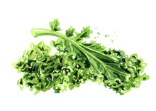 Green Kale Salad  Leaf Vegetab...