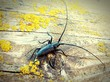 Leinwanddruck Bild - Longhorn Beetle On Wooden Surface