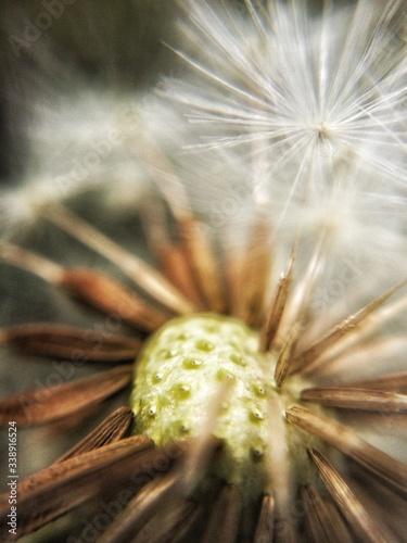 Obraz na plátně Full Frame Of White Dandelion Seeds