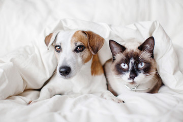 Dog and cat under white blanket