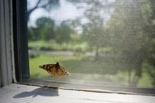 Butterfly Perching On Window