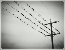 Low Angle View Of Birds Perchi...