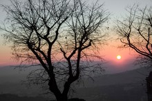 Sunset Through Tree Branches O...