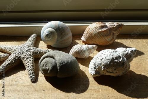 Obraz na plátně Be fossilized, shell to rock, fossilization,