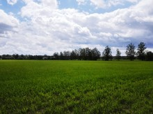Scenic View Of Grassy Field Ag...