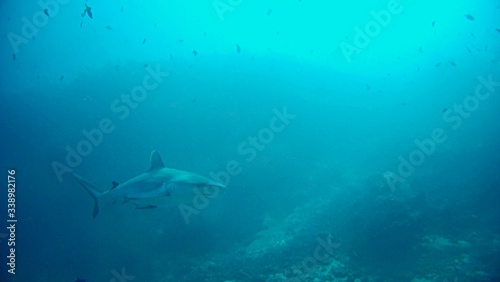 Valokuva Underwater View Of Shark Swimming In Sea