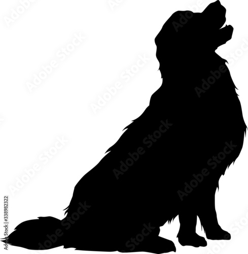 Photographie Vector silhouette of a golden retriever dog sitting