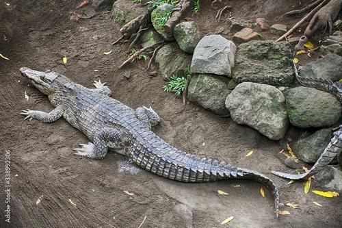 Leinwand Poster High Angle View Of Crocodile On Land