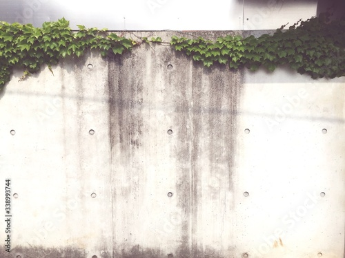 Papel de parede Creepers Growing On Wall