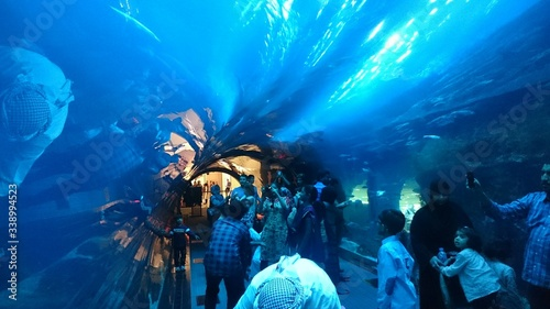 Fotografia People In Dubai Aquarium And Underwater Zoo