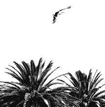 Seagull Flying Over Palm Trees In Clear Sky