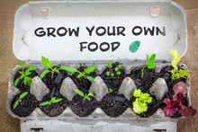 Vegetable Seedlings Growing In Reused Egg Box With Hand Written Sign, Grow Your Own Food, Save Money Reduce Waste, Recycle