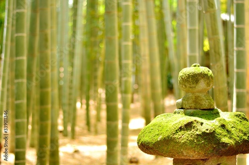Fotografía Close-up Of Moss Covered Stones Against Bamboos