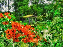 Red Flowers Growing In Front Of Lake In Park