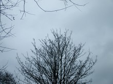 Upward View Of Tree Top And Sky In Overcast