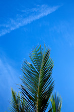 Close-up Of Palm Tree Branch Against Sky