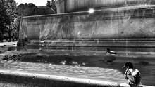 Mallard Ducks In Fountain
