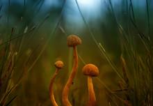 Wild Mushroom In The Grass