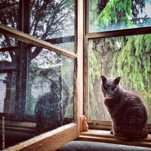 Fotografie, Obraz Portrait Of Black Cat Sitting On Window Sill