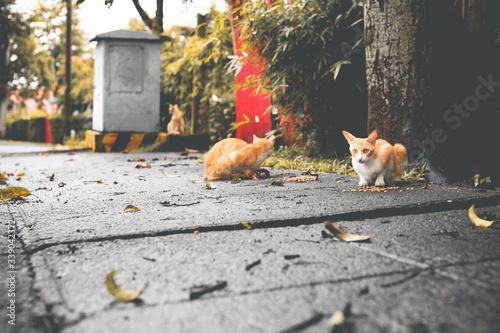 Fototapeta Surface Level View Of Stray Ginger Cats On Sidewalk