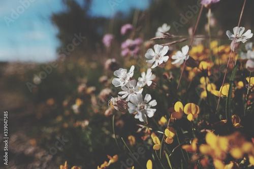 Wildflowers Blooming Outdoors - fototapety na wymiar