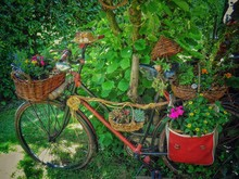 Plants Growing In Basket On Bicycle