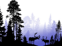 Two Deers In Blue Forest Illus...