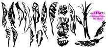 Set Of Banana Palm Leaves, Trunk And Bananas Drawn Isolated On White With A Dry Brush, Free Line, Large Strokes. Ideal For Textile Design Of Summer Clothing