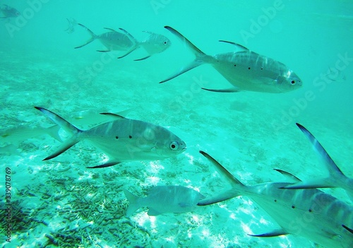 Canvas Print Close-up Of Fishes Swimming In Sea