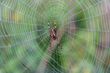spider on spider web with dewdrops