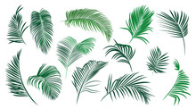 ..Set Of Various Palm Leaves. Colored Vector Elements Of Exotic Nature On A White Background.. Realistic Sketch.  .