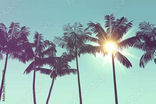 Tropical palm tree silhouette against bright sunlight Canvas Print