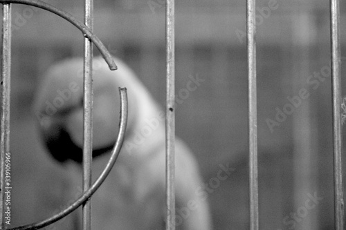 Fotografie, Obraz Close-up Of Parrot In Cage