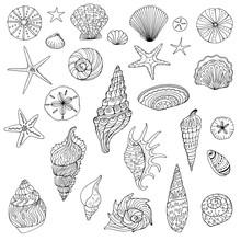 Large Set Of Hand Drawn Shells
