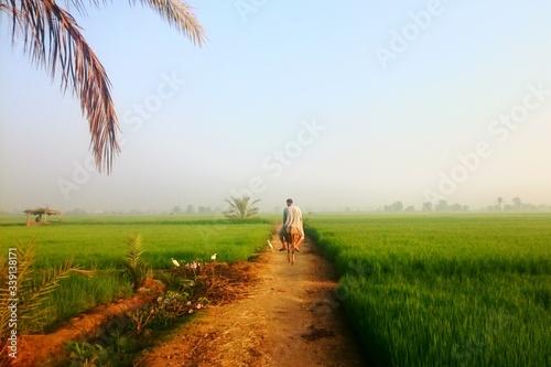 Stampa su Tela Man Riding Donkey Amidst Field Against Sky