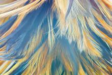 Beautiful Color Chicken Feathe...