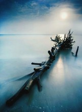 Driftwood On Sea Against Sky In Foggy Weather