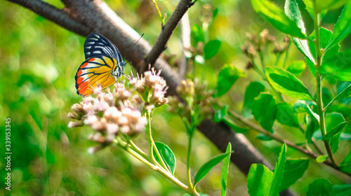 Canvas Print Close-up Of Butterfly Pollinating On Flowers