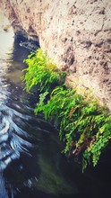High Angle View Of Plants Growing On Rock By Water At Montezuma Well