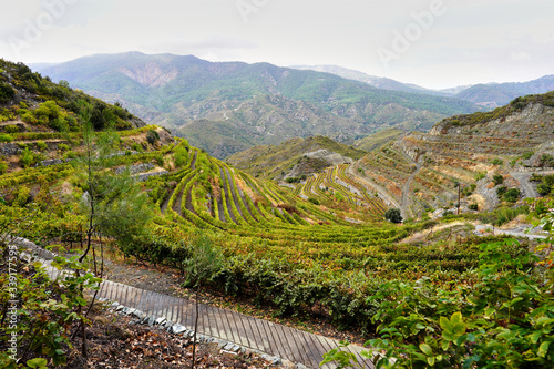 Foto beautiful panoramic view in olympos mountains and the green vineyards on the isl
