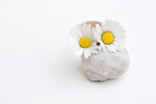 Two Daisy Flowers In A Small Vase From An Empty Snail Shell, Copy Space For Text