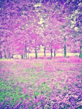 Purple Trees And Grass On Field