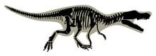 Silhouette Of A Tyrannosaurus Skeleton Vector