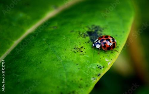 Fototapeta High Angle View Of Ladybug On Leaf