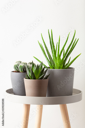 green houseplants cactus succulent aloe vera, gasteria duval, parodia warasii Canvas Print